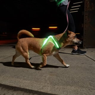 Photo of LightHound